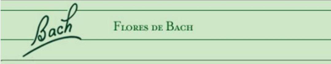 Dr. Bach Firma Bigger