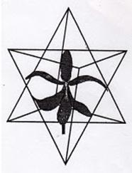 La Flor de Lirio y Estrella de 6 puntas